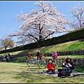 20140407 京都大阪賞櫻之旅-自行車遊鴨川&賀茂川畔