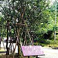 南投景點|HOHOCHA喝喝茶-製茶導覽、黃金品茗 混茶體驗,長輩親子一起揉茶、Pizza DIY|台灣香日月潭紅茶廠