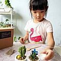 親子DIY體驗|下班隨手作 DIY 材料包,新手也能輕鬆入手美美的多肉植物|室內植栽擺件