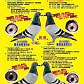 五洲賽鴿雜誌廣告
