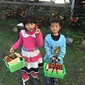 *2017.01.28-初一採草莓