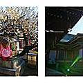 【日本】京都大阪五天四夜自由行Day3-京都北野天滿宮