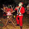 【三義民宿 向陽田園】為了聖誕節而打造的麋鹿‧雪橇...喬巴???