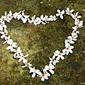【三義民宿】2012 向陽田園油桐花地毯