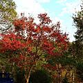 2013向陽田園楓紅季節