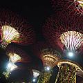 2015新加坡濱海花園SUPER TREE