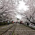 蹴上鐵道之櫻花