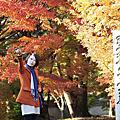 清涼寺楓紅