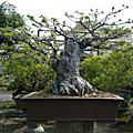日式庭園-兼六園