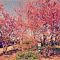 南投清境-寞內花園山莊