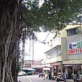 台南‧東區 後甲榕樹下麵店、裕農三街王家麵店
