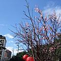 2008冬,毛怪逛花市