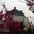 2009-02-11台北燈節&02-15保安宮、孔廟、中正紀念堂賞櫻行