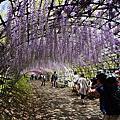 2014 日本九州 6天5夜 自助旅行