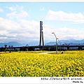 2012-幸福水漾公園.油菜花田