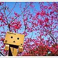2014.1.31賞櫻去