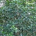 20060611_劍潭山