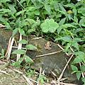 20060422_豹山溪步道