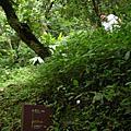 20070630_足印草山、體驗自然(向天山、面天山線)