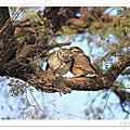 印度野鳥天堂之猛禽陸鳥篇