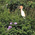 金城湖鳥類