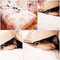 Wales芳庭系列-唯美之韻 純棉雙人八件式可拆式床罩組