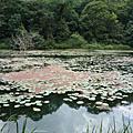 980709福山植物園
