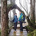 2020.01.29天才阿呆宜蘭大同~太平山檜木原始林&鐵杉林步道