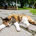 2013-03-29 街貓-植物園慵懶的午後