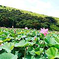 2013-06-08 清水五福圳自行車道賞荷