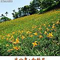 2013-07-12 沐心泉˙金針花