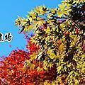 2015-11-23 福壽山農場