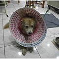 20111230_狗狗