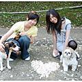 20090503[苗栗]南庄桐花季