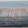 20100606~0607[肯亞]Nakuru