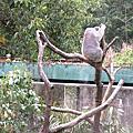 手機拍拍-動物園