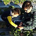 三輪車草莓園