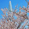 韓國首爾石村湖賞櫻花