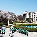 慶熙大學賞櫻花