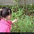 1001102校園植物觀察