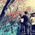台北-2013陽明山花季