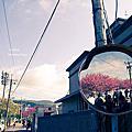 台北-平菁街42巷-櫻花