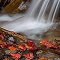 秋的世界。紅榨槭。108K(中橫)