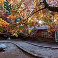 秋的世界。福壽山