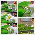 羽毛蓮花新植物