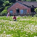 中湖百合花園