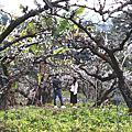 李花森林2020