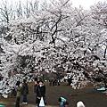 2010@東京_櫻花特集_新宿御苑