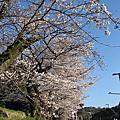 2011_京都賞櫻_高瀨川_哲學之道_蹴上鐵道