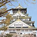 京都。賞桜庭遊記